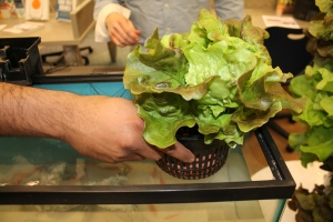 Sudhir demonstrates aquaponics at Cleveland Mini-Maker Faire 2013